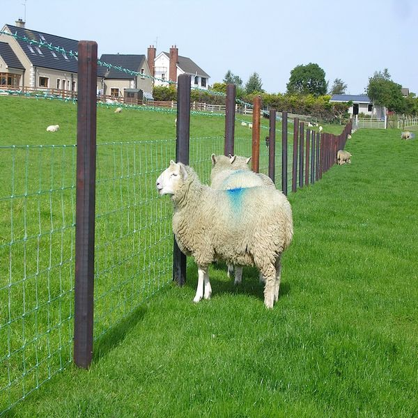sheep goat dog rural farm fence,ranch wire ,ranch fence 240